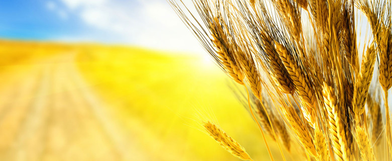 Разработка системы «Спрос-Предложение» для агропромышленного комплекса.